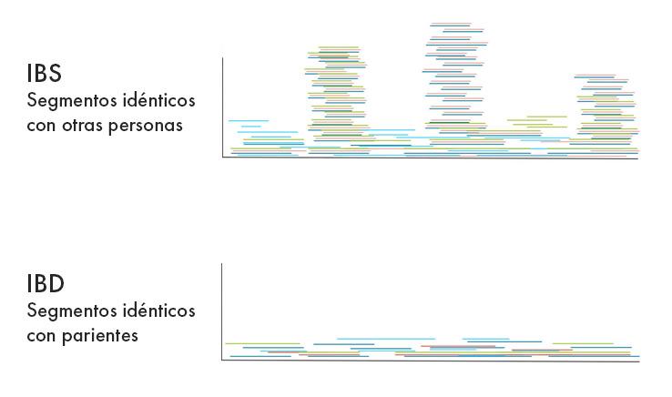Distribución de segmentos de ADN en IBS y IBD
