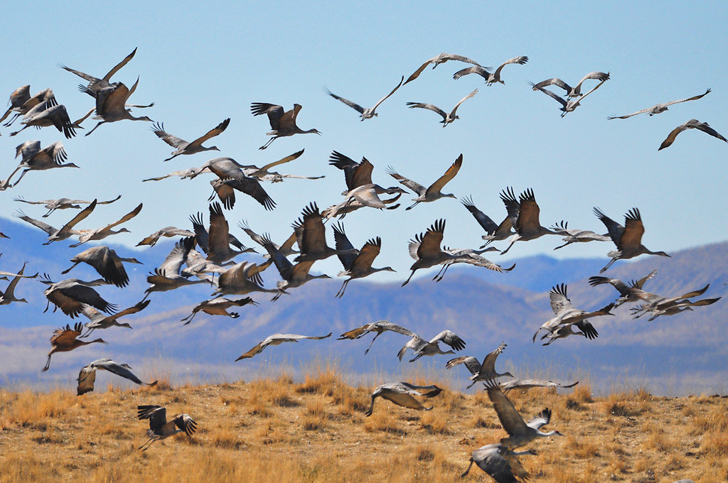 Aves Migratorias - Personas Migratorias
