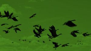 Levantando Vuelo: La Migracion de Aves y de Seres Humanos