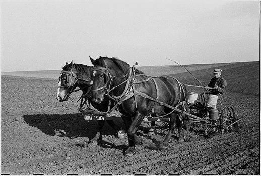 Colonos preparando la siembre de maíz (1936)